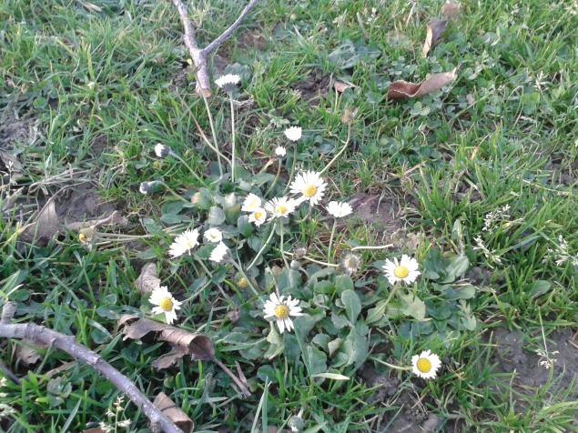 Wiesenblumen...