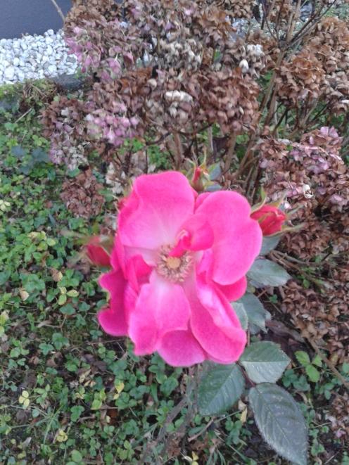 ...und in Gärten